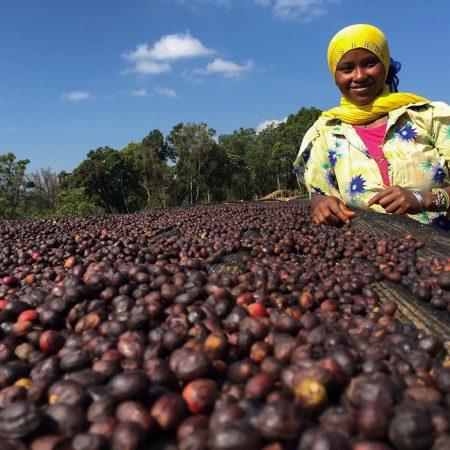 قهوه تک خاستگاه اتیوپی سیدامو اسکای لب – 250 گرم