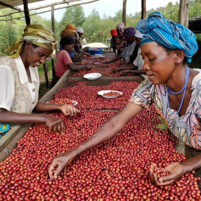 قهوه رواندا - قهوه ست