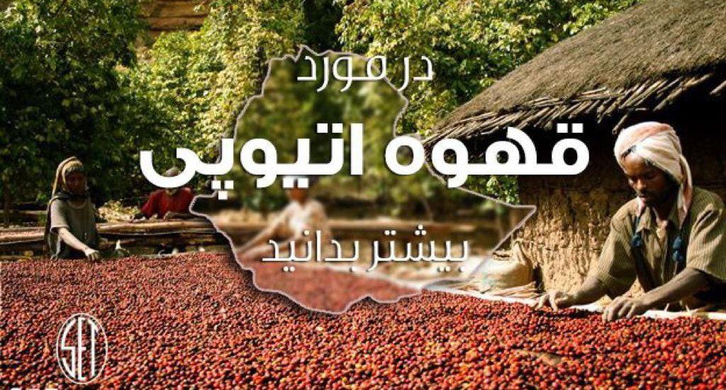 در مورد قهوه اتیوپی بیشتر بدانیم