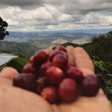 قهوه تک خاستگاه کلمبیا El Diviso
