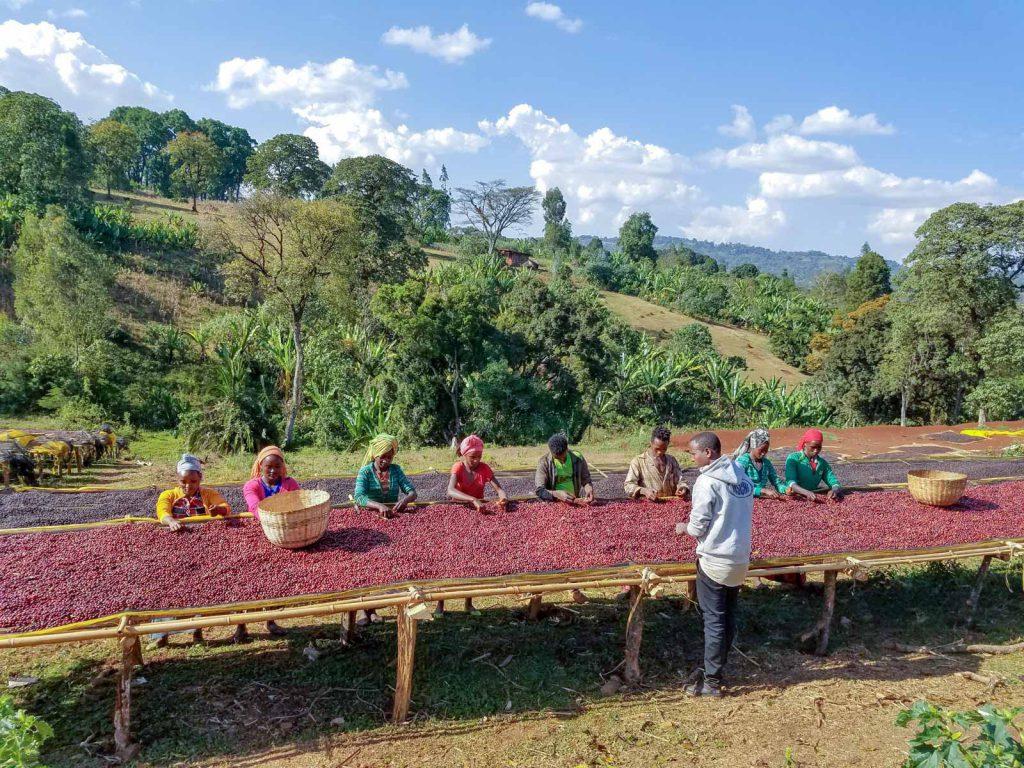 قهوه تک خواستگاه اتیوپی KOCHERE اسکای لب