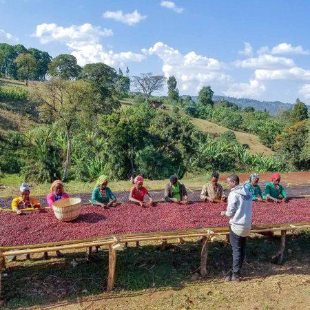 قهوه تک خوستگاه اتیوپی KOCHERE اسکای لب